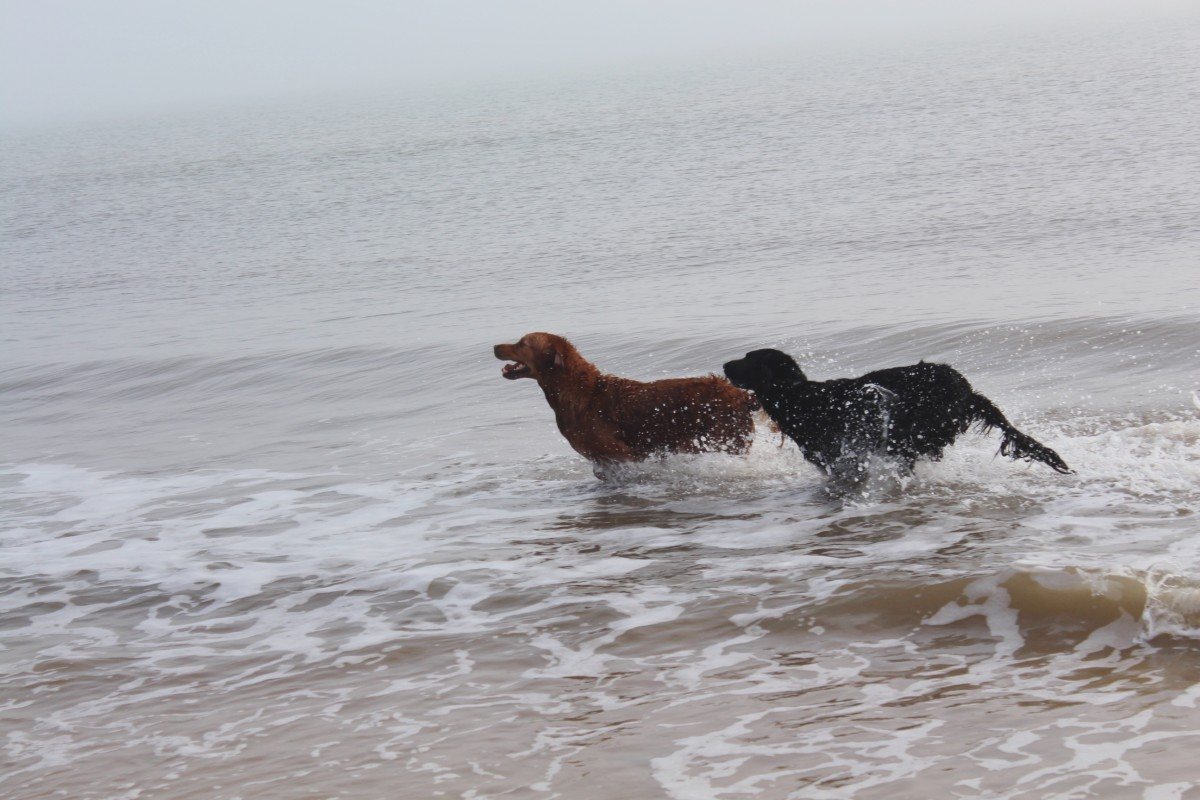The Dangers of Water Intoxication in Dogs