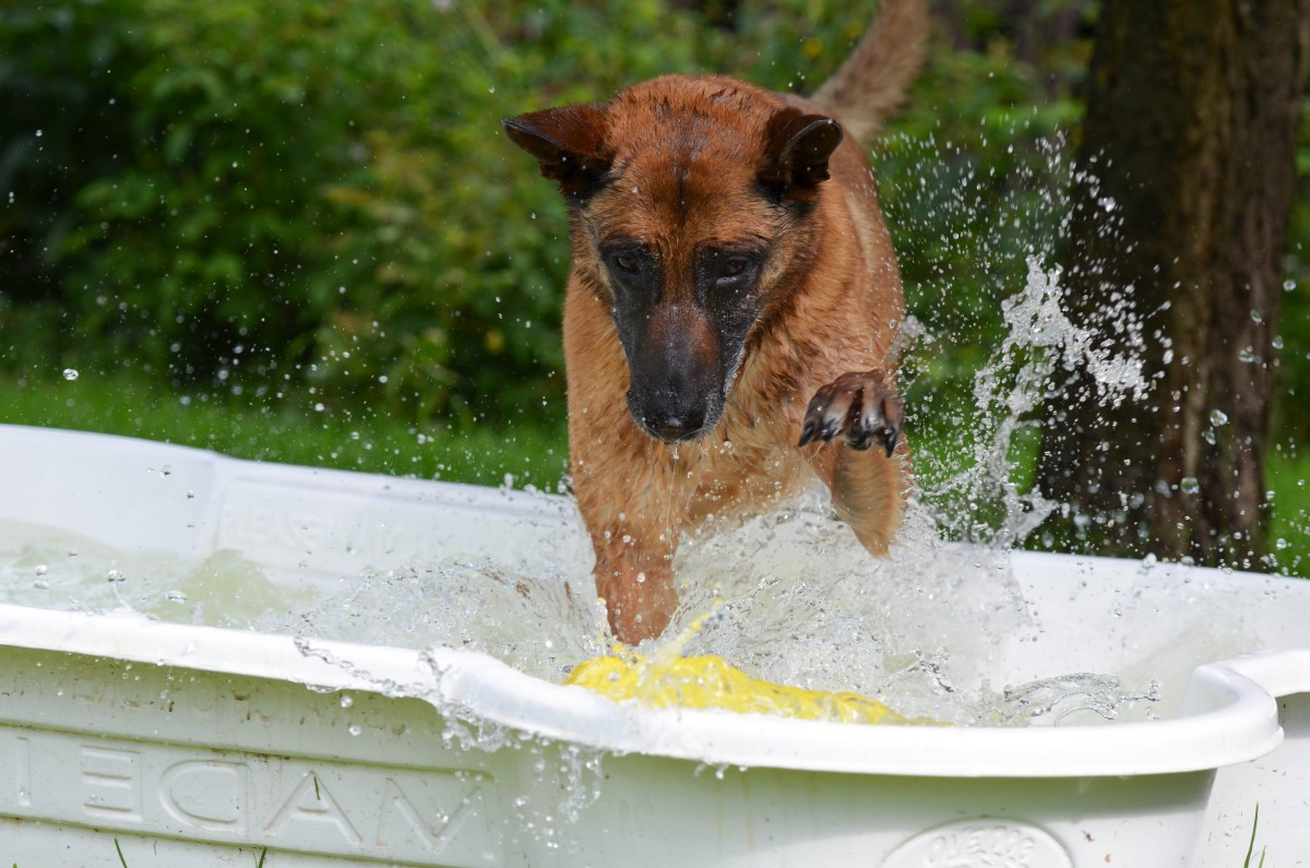 For dogs that love water, simple precautions will enable them to keep playing safely