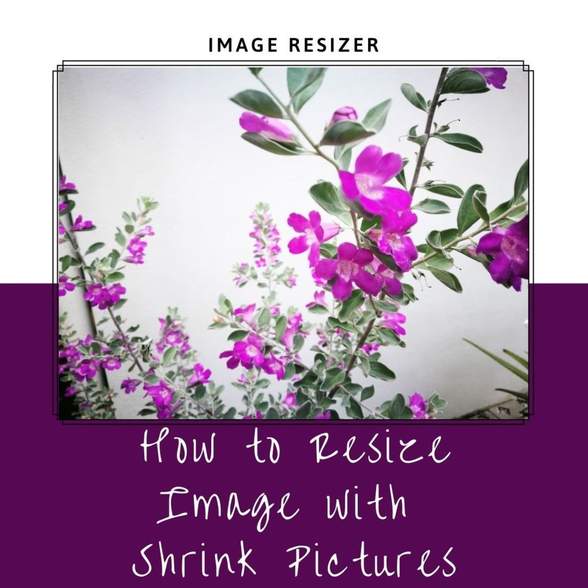 Resize Image with Shrink Pictures, a Free Online Photo Resizer