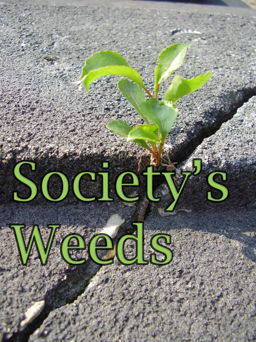 Society's Weeds, Poetry from the Homeless Experience and Beyond