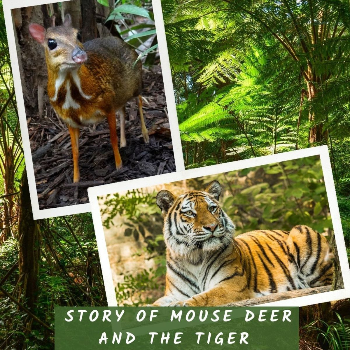Story of mouse deer and the tiger