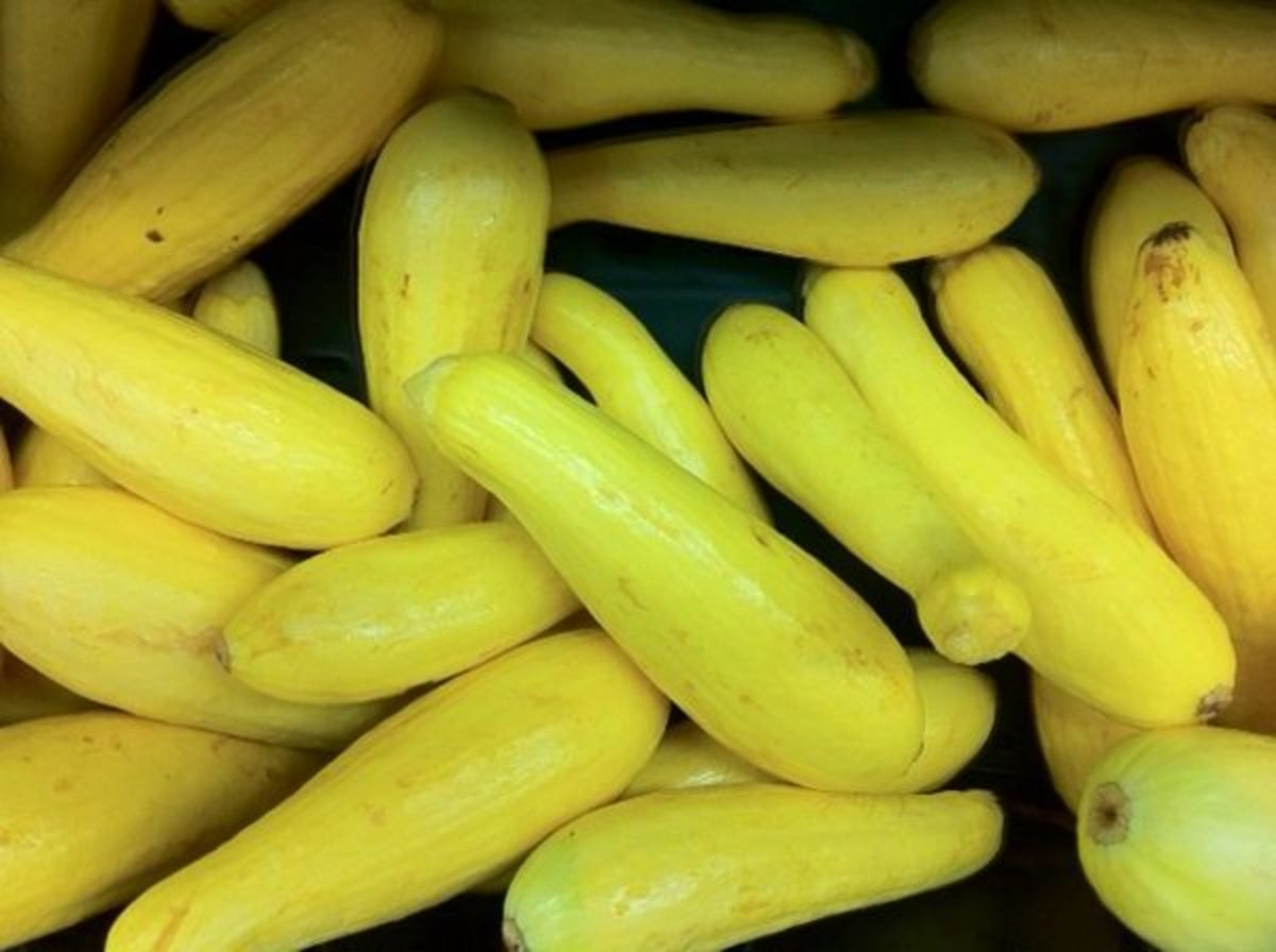 Yellow Squash Recipes. Eat Them Year-Round, in Salads, Cooked, or Pickled.