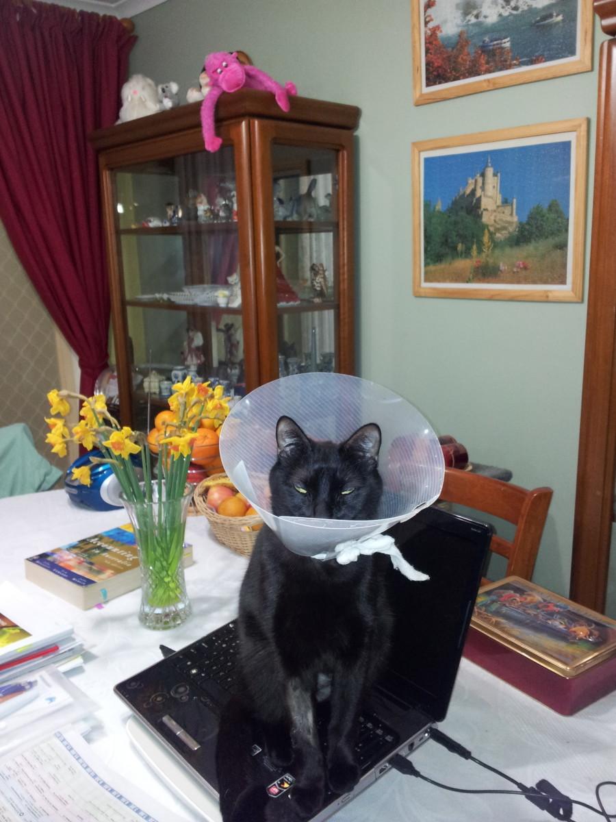 importance-of-pet-insurance