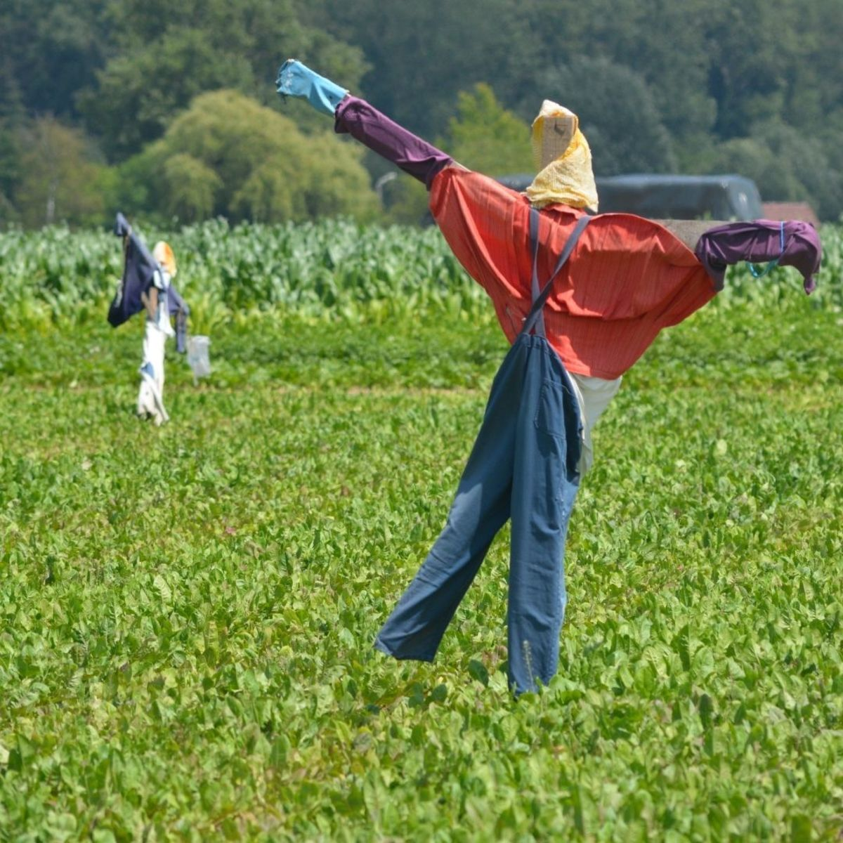 The scarecrow used by the farmer to trick Sang Kancil