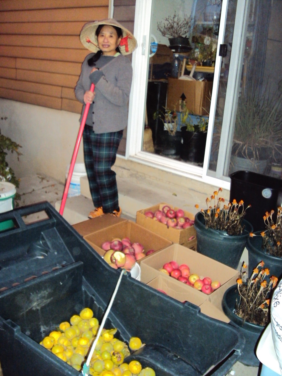 Four varieties of apples, along with the grapes, are among our final harvests each year.