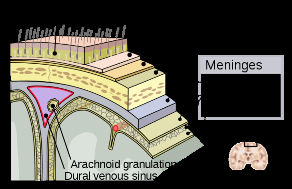 Meningitis Types