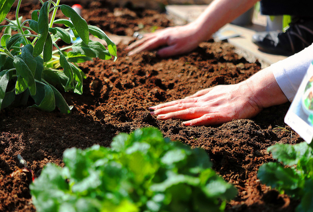 Growing your own vegetable garden is both a relaxing and rewarding experience.