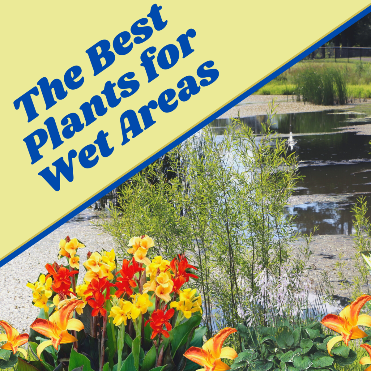 15 plant ideas for gardens with poor drainage and standing water.
