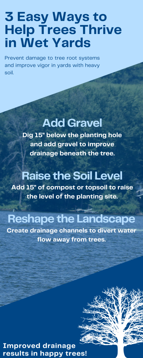 Improving your yard's drainage can help your trees flourish.