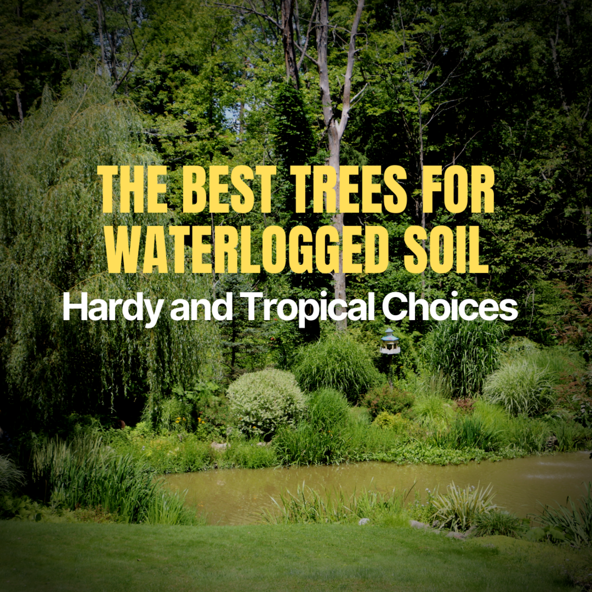 Select the right trees to grow in areas with poor drainage or standing water.