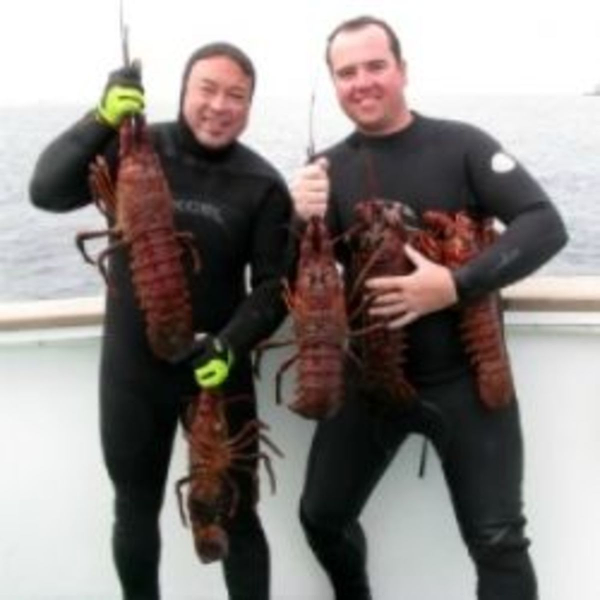 Spiny Lobster from California