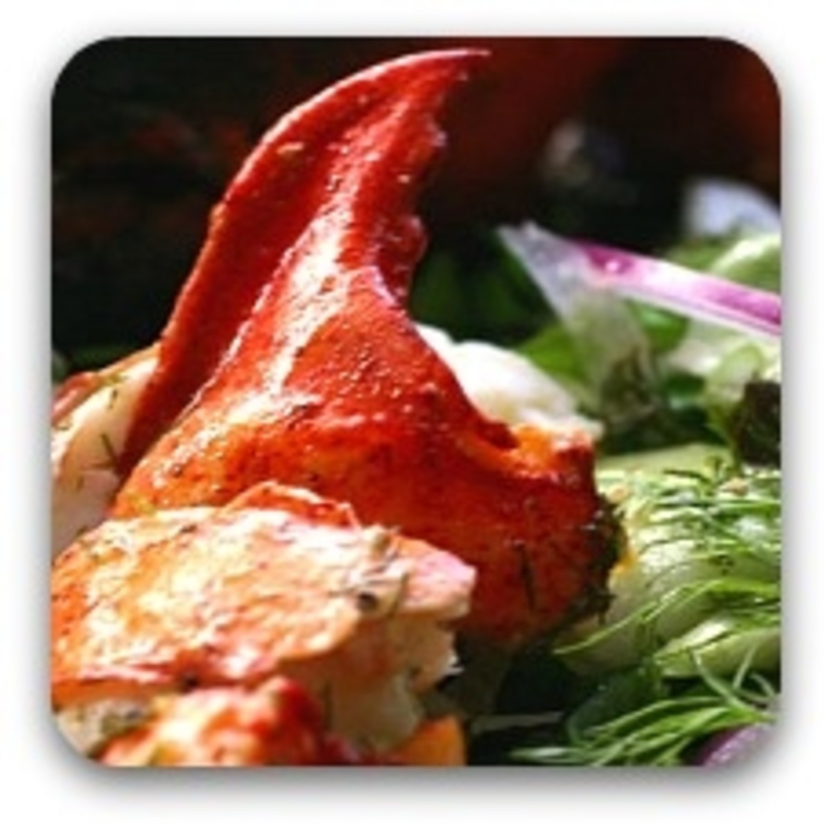 Maine Lobster Salad with Wasabi Dill Dressing