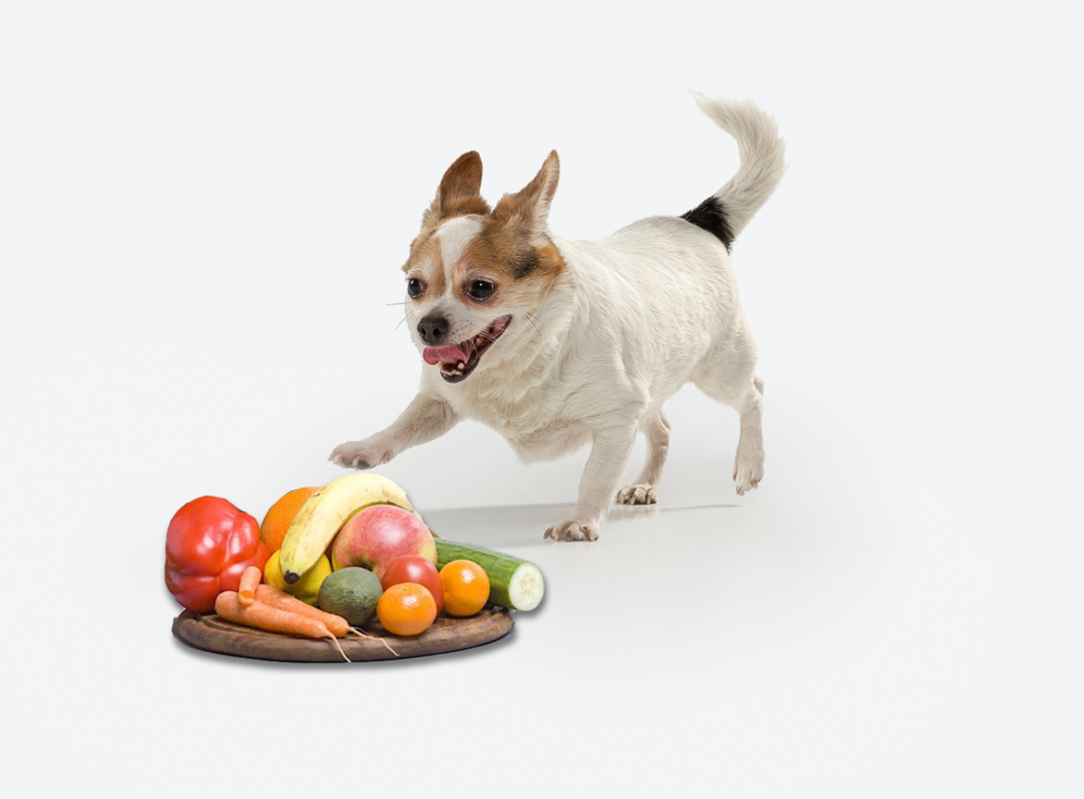 Homemade Dog Food Recipes For Allergies