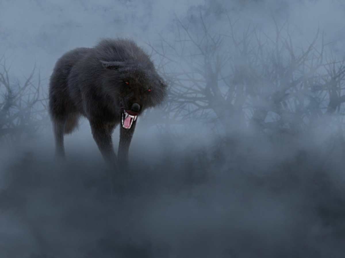 The color of a wolf's coat is said to determine its intent.