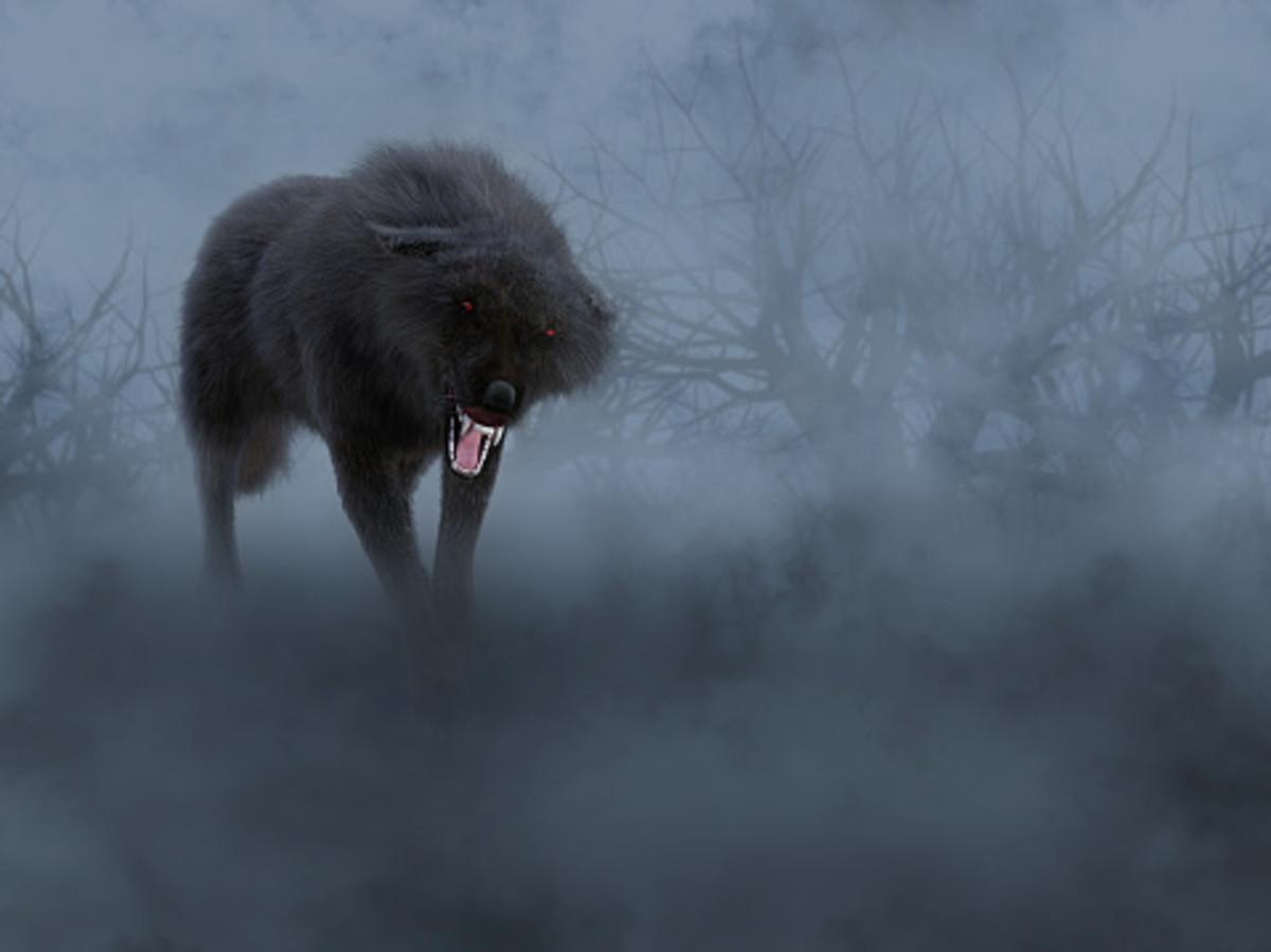 Superstitions and Legends Regarding Wolves