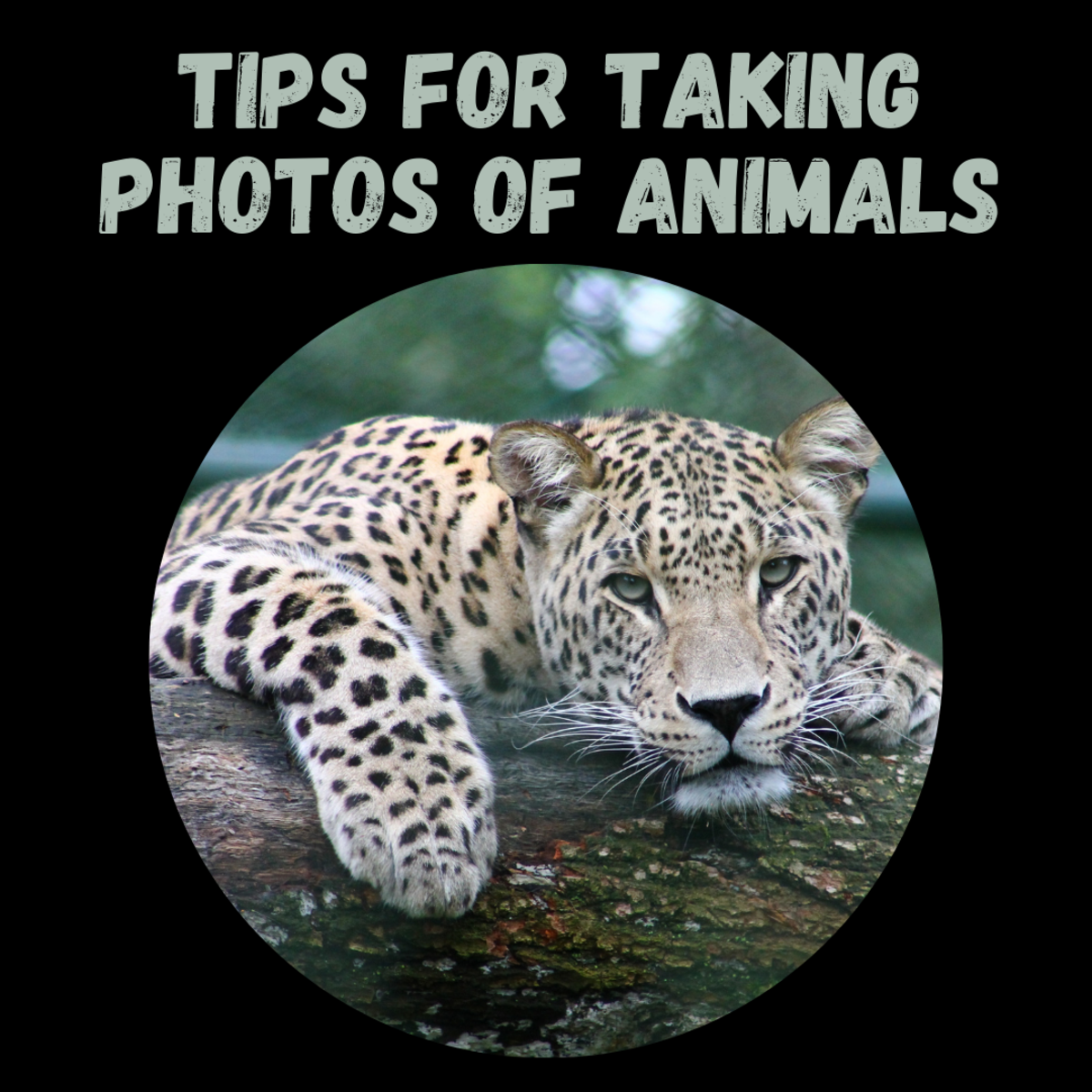 Learn how to take great wildlife photos with these five useful tips!