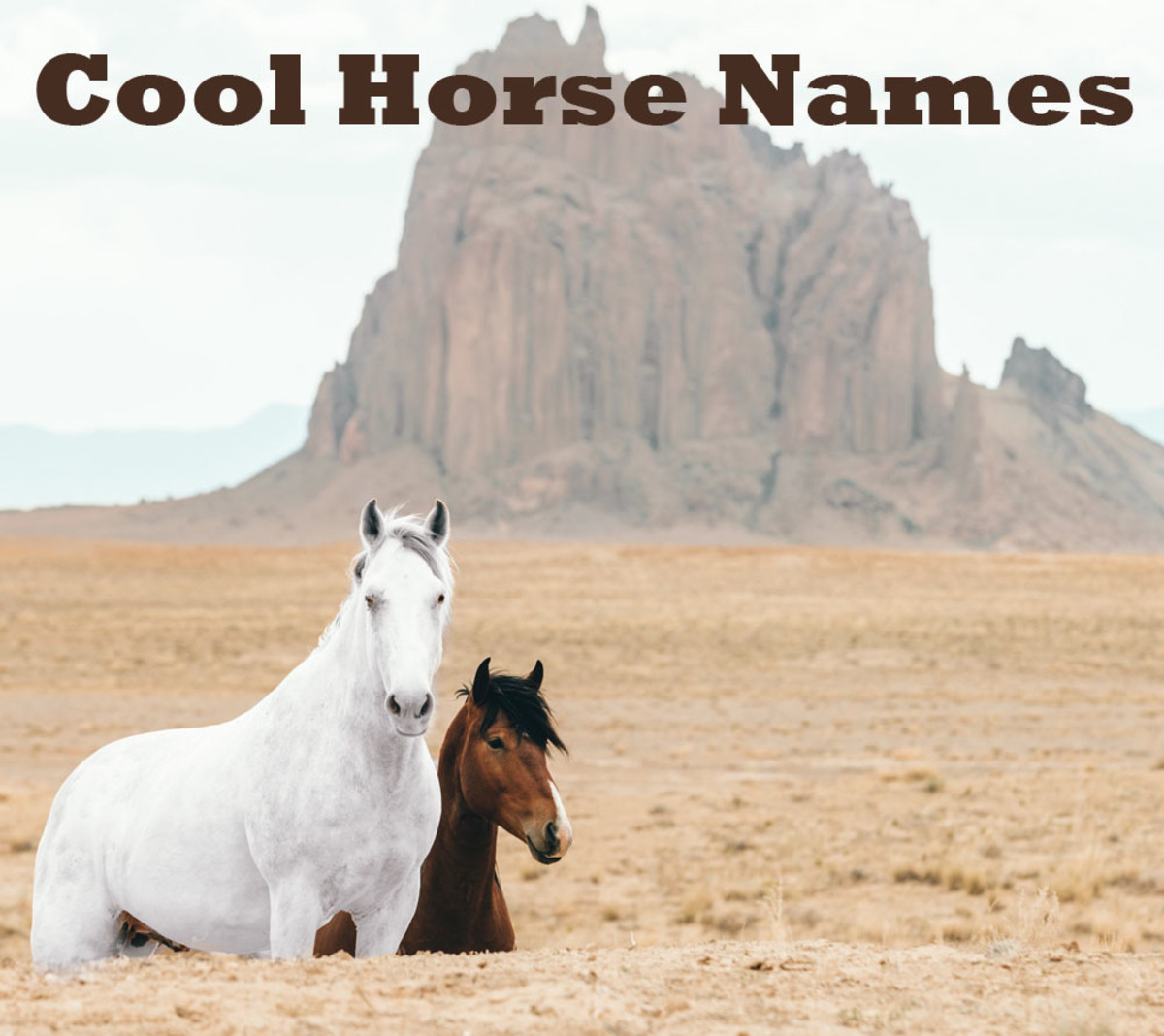 Wild horses in New Mexico.