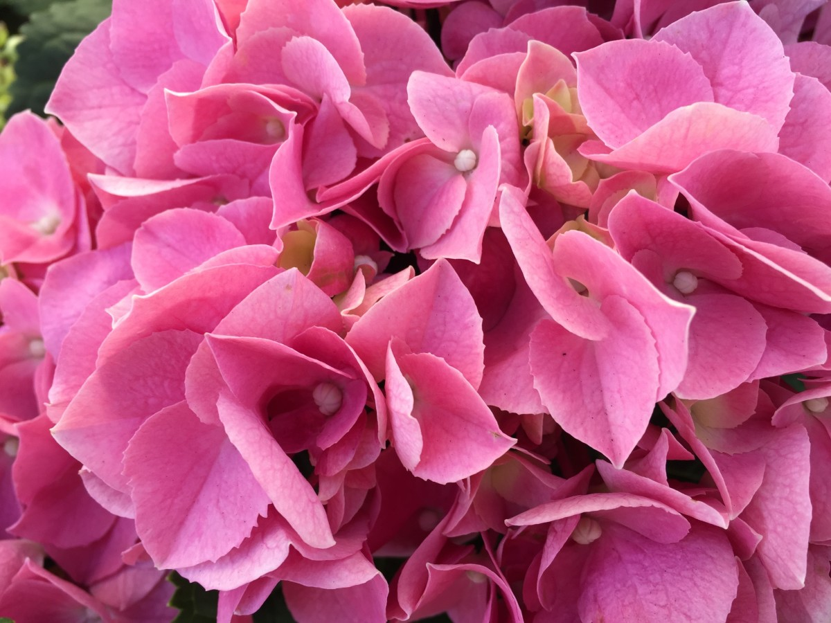 Tales From a Master Gardener