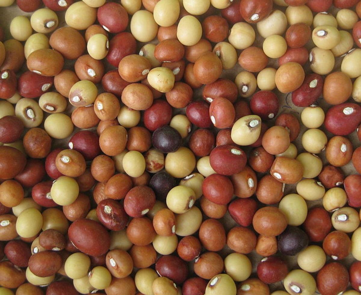 Dried Bambara groundnuts
