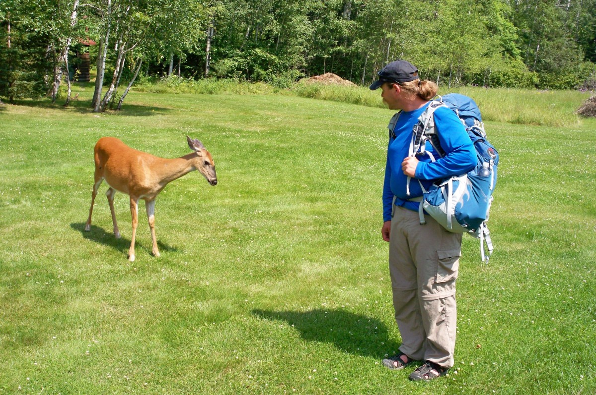 A bold deer at Ellsworth Rock Gardens