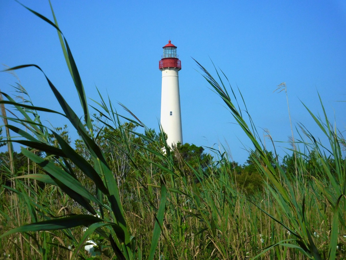 View of Cape May Lighthouse from Cape May Point State Park
