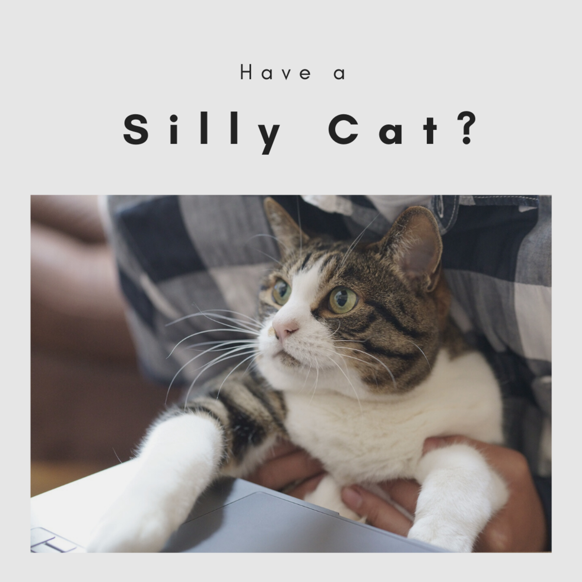 Funny cat names are just not suitable for all cats; sweet cats should have cute names, lazy cats should have plain names, but silly cats need funny names!