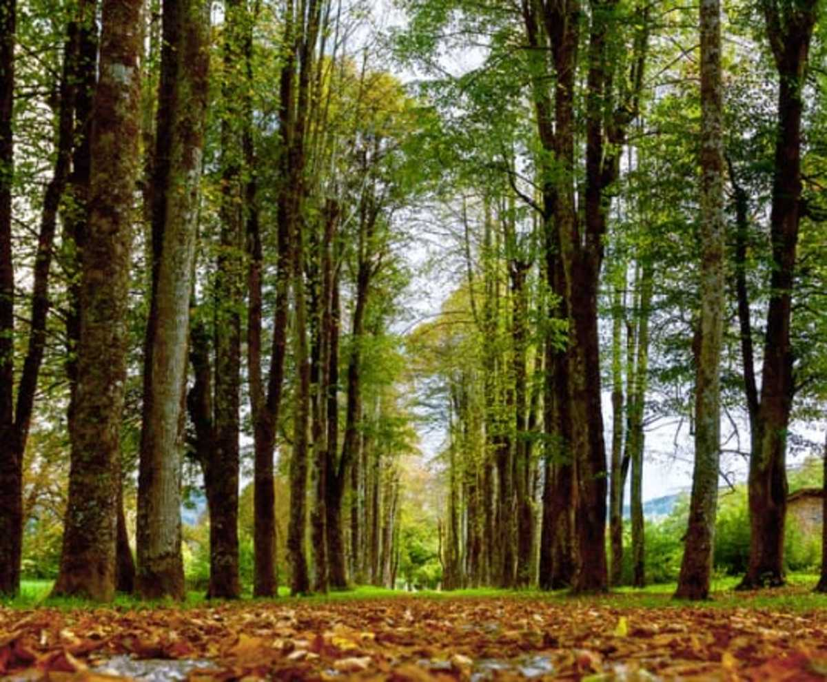 Importance of Forests in Our Life