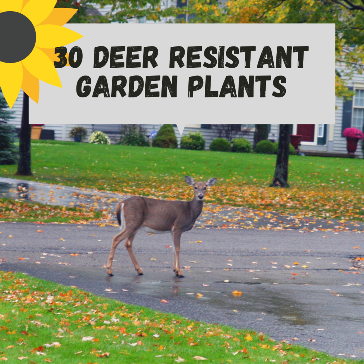 30 Deer-Resistant Flowers, Shrubs, and Trees for Your Garden