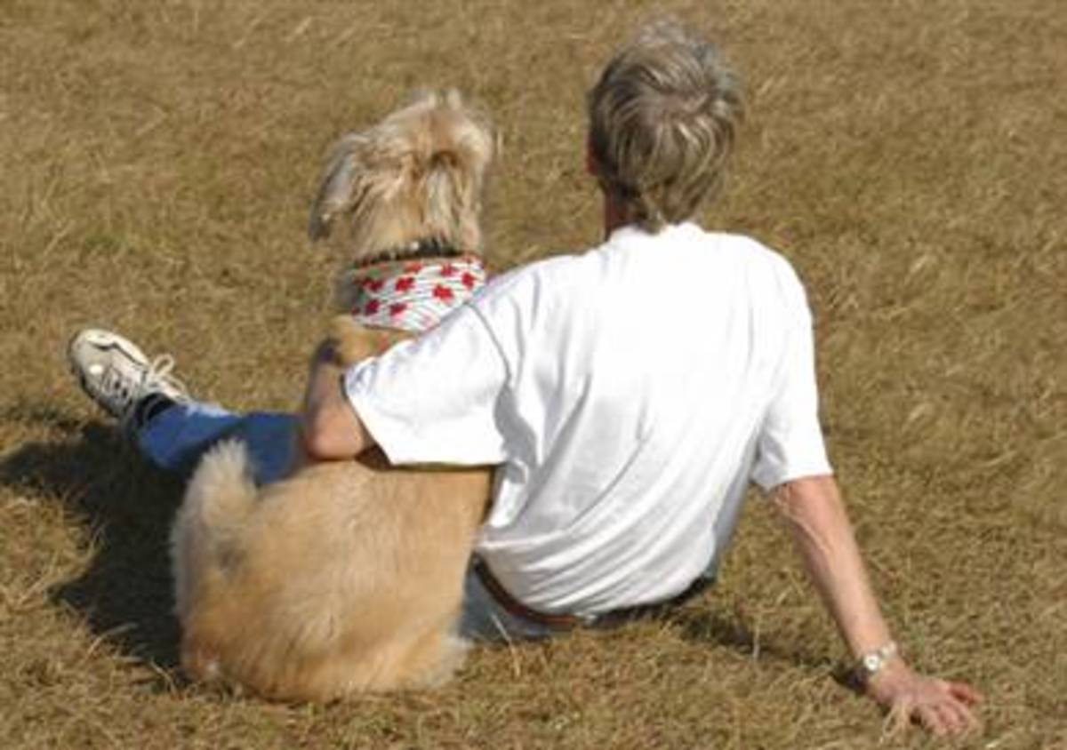 Because small dogs have little bodies, gentle, positive training methods will help them feel safe.