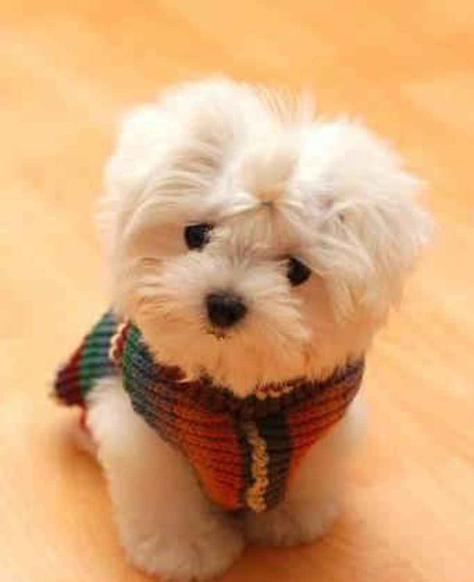 Though small in stature, little dogs have tremendous hearts and an abundance of love and affection to share.