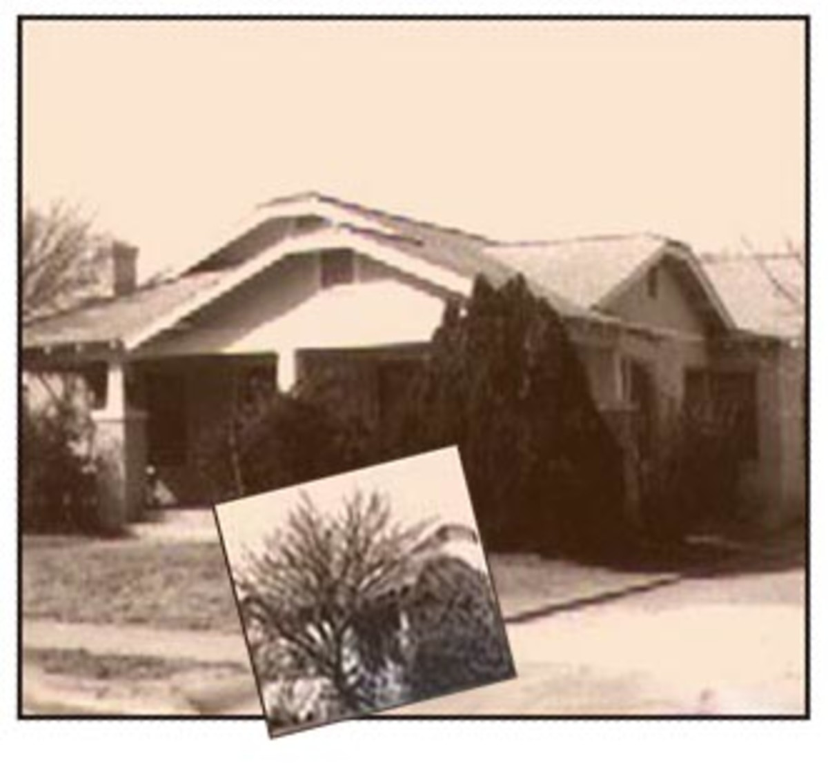 1120 Pecos St. with apricot tree - wintertime