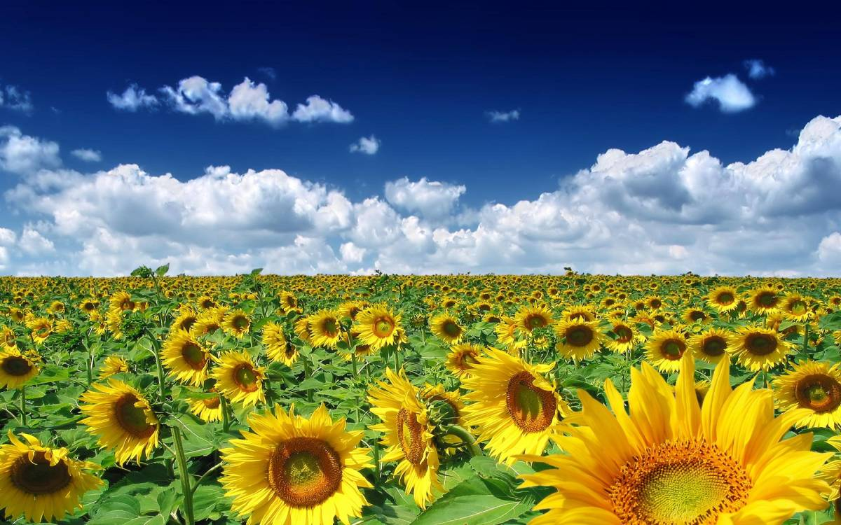 seeds-of-your-love-sundays-inspiration-30-to-mi-habibi-amara-hassan
