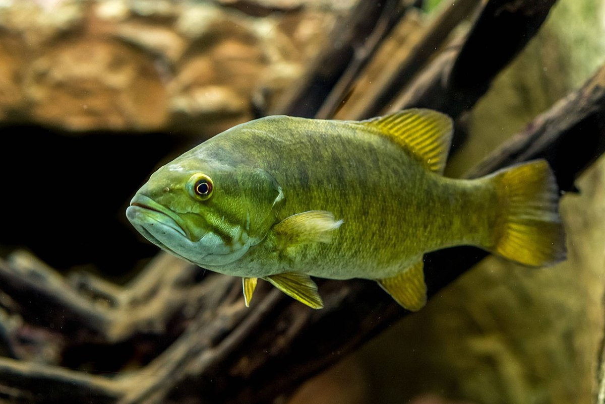 Can You Keep Wild Fish as Pets?