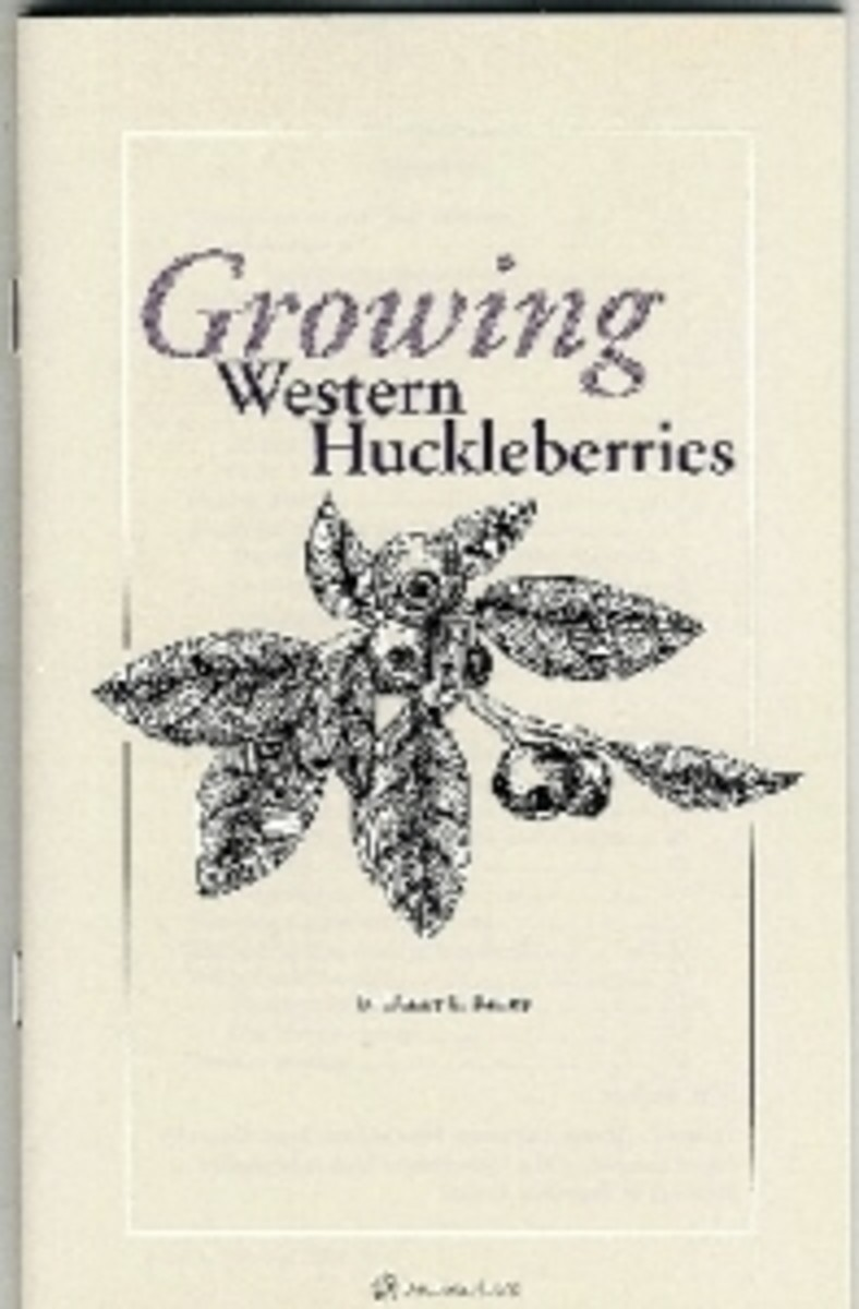 Growing Western Huckleberries