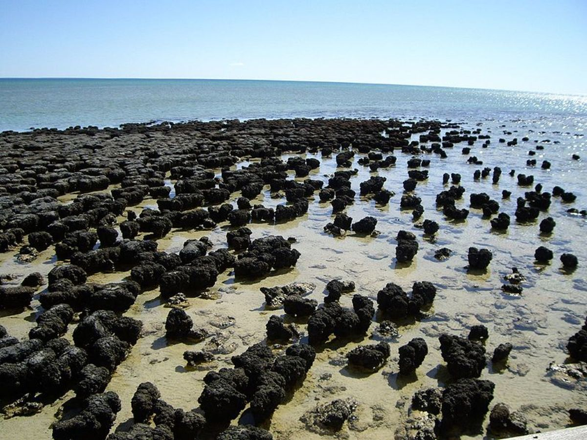 Stromatolites can tell us clues on the history of earth's ancient history.