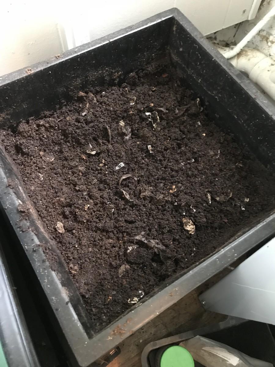 Worm castings in my Worm Factory 360 worm bin.