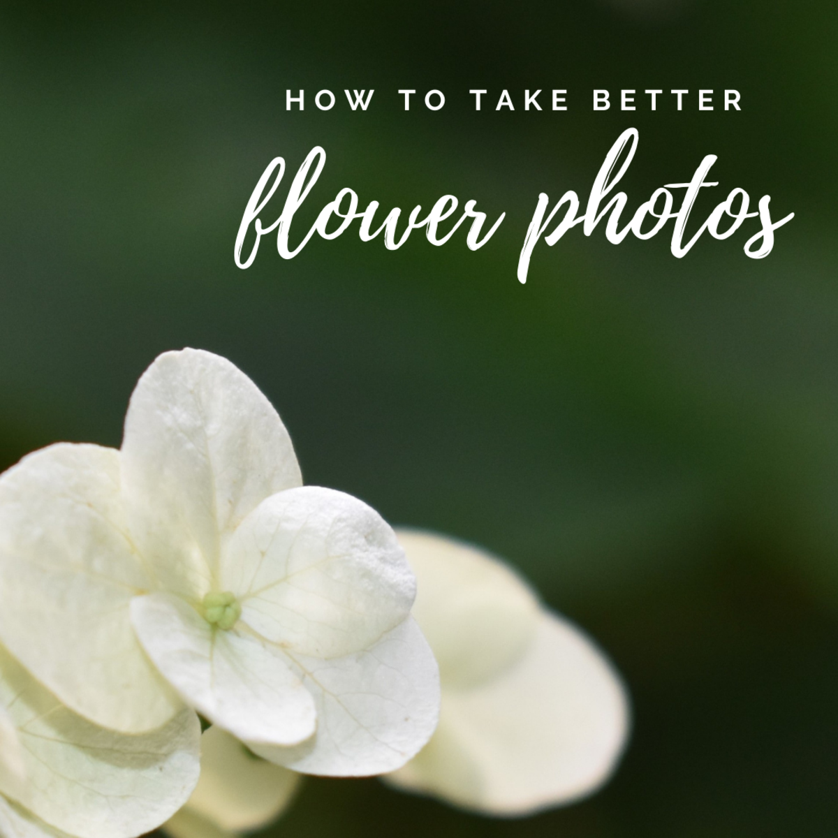 Improve your macro skills for stunning flower photography.