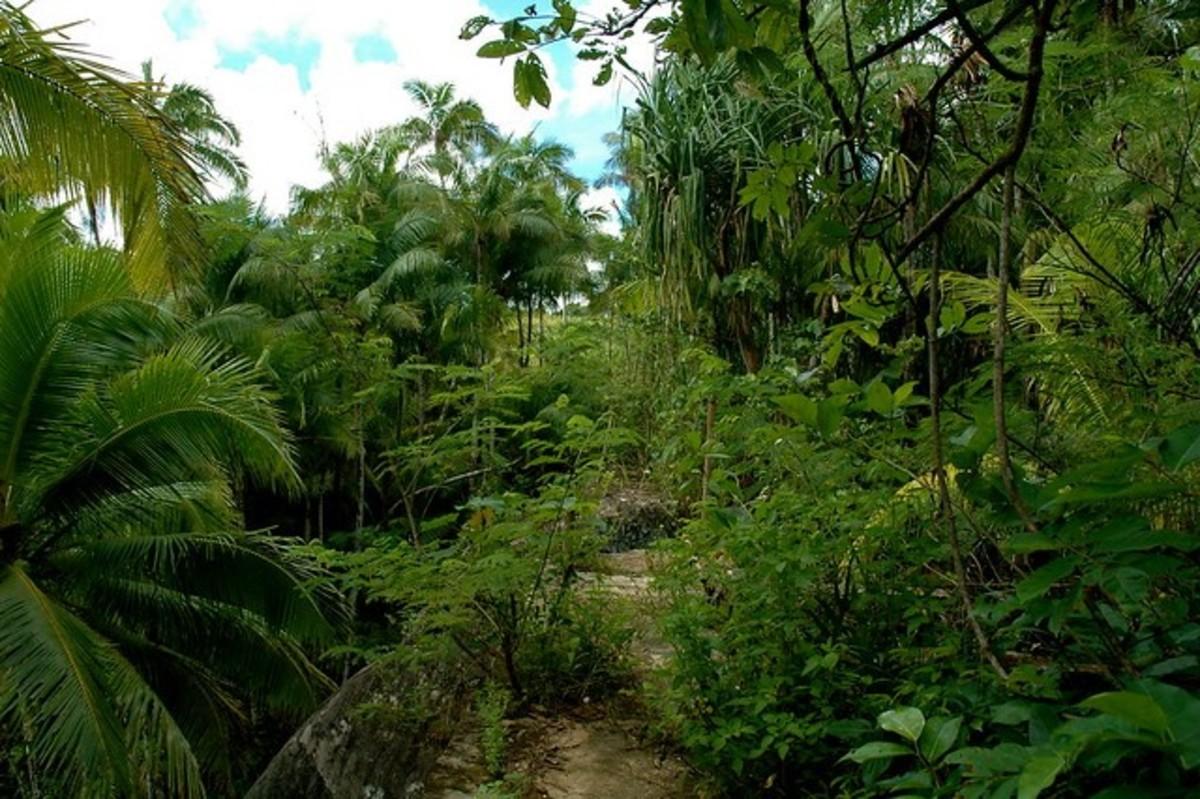 Guam: Wildlife Ritidian Refuge Part One