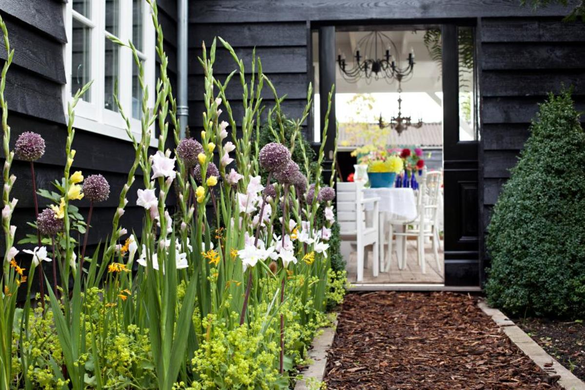 mix with yellow and white gladioli to form a welcoming path. Consider Mixing alliums with both similarly tall and then shorter plants and flowers for contrast.