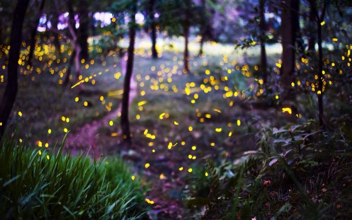 Wildflowers And Fireflies Part 1: A Fated Meeting In A Secret Place