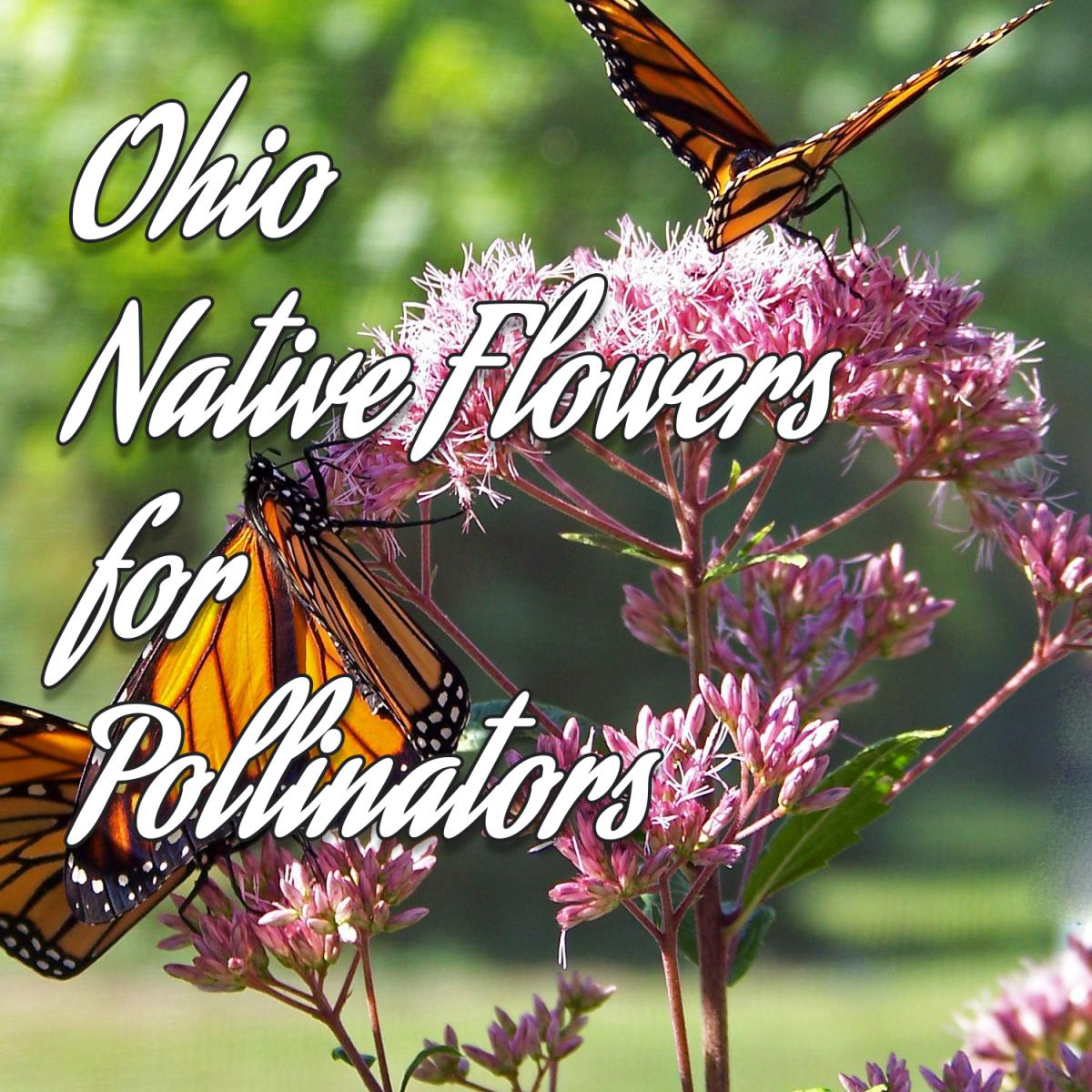 Ohio Native Flowers for Pollinators