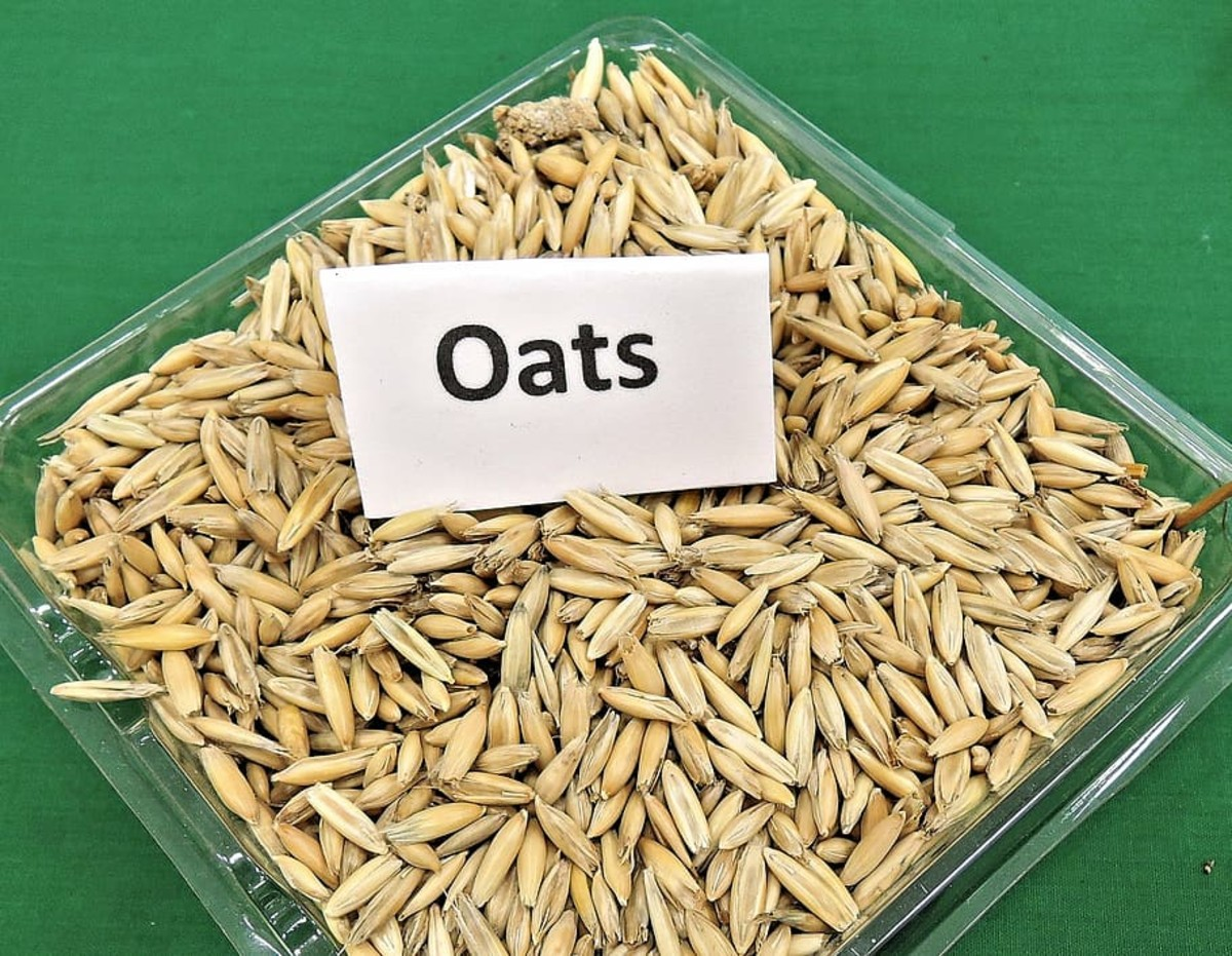 oats grains, clear, plate, oats, grain, cereal, animal feed, seeds, edible, food