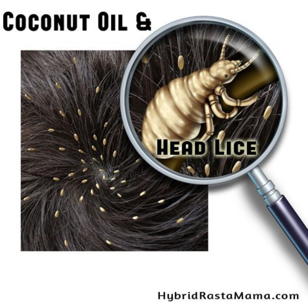 Organic virgin coconut oil for lice treatment