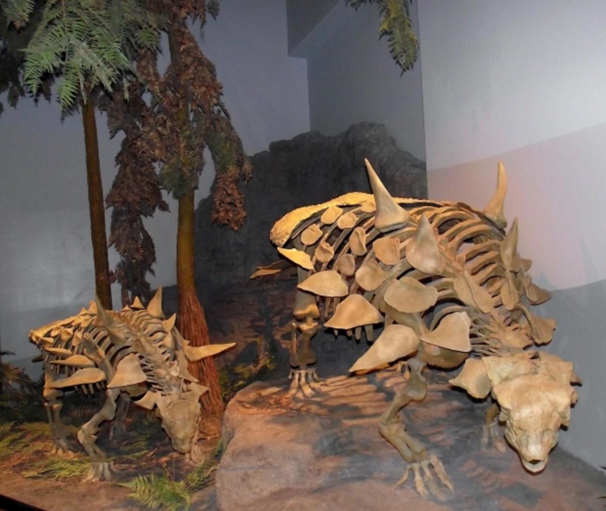 Gastonia on display.