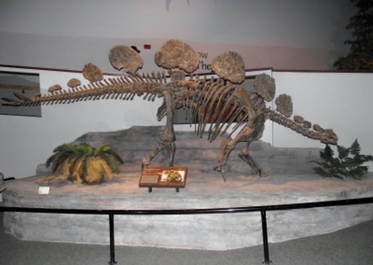 This dinosaur is Hesperisaurus