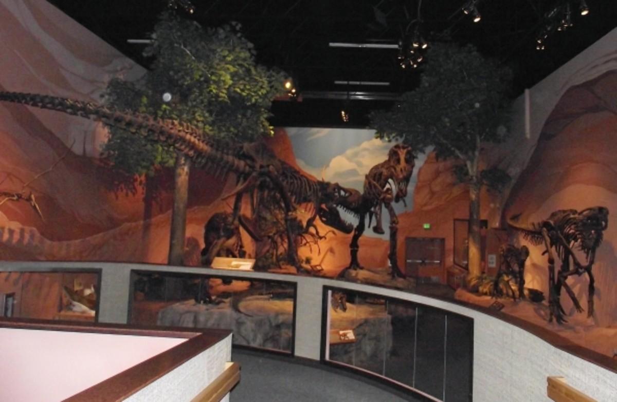 T-Rex display at the dinosaur museum.