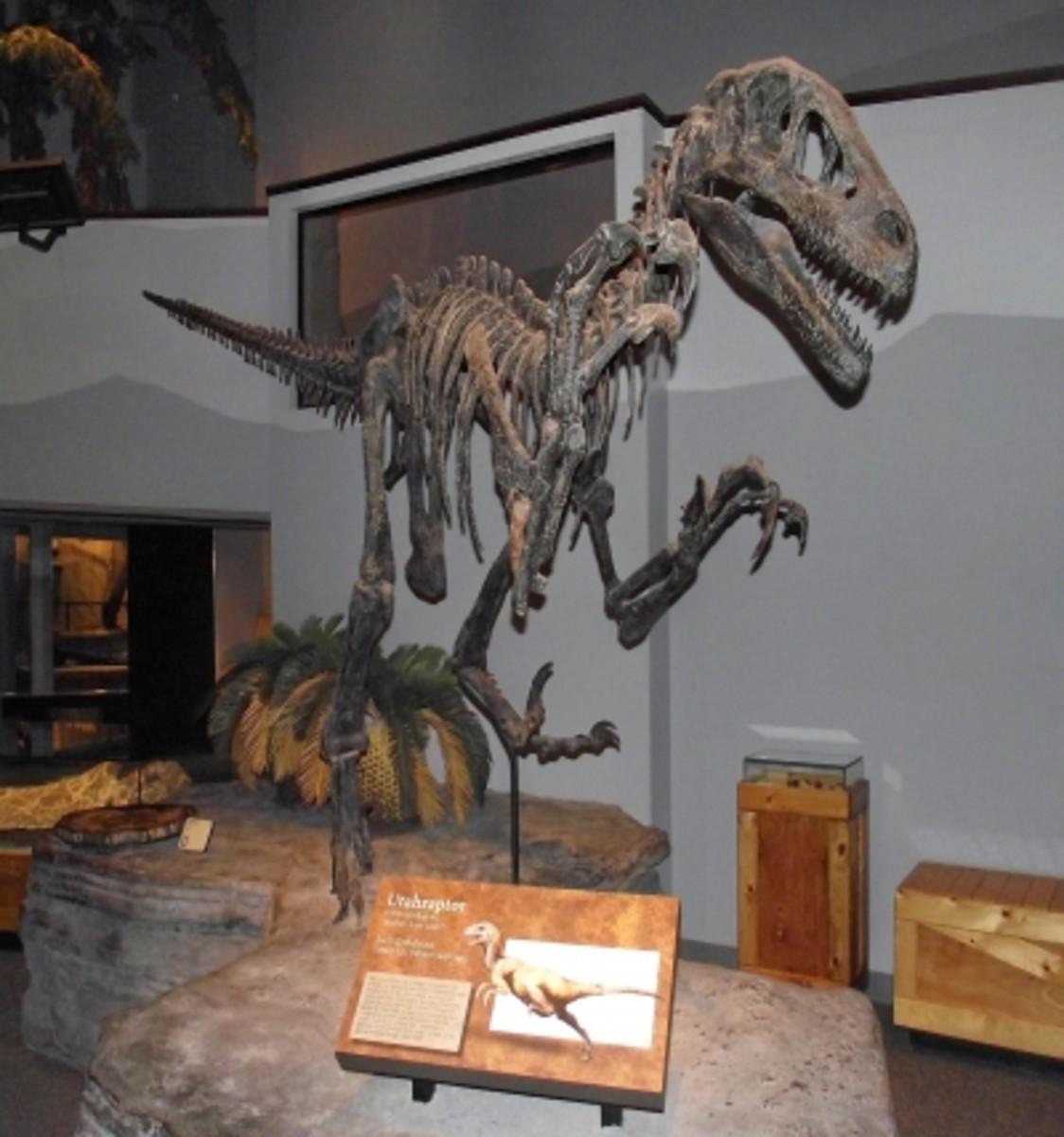 The Utahraptor is one scary looking dinosaur.