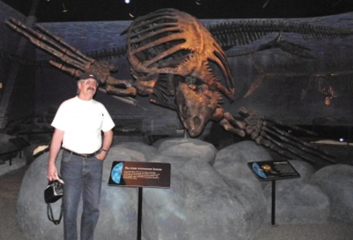 One gigantic turtle. Paul is just there to give you an idea of this dinosaur's size.