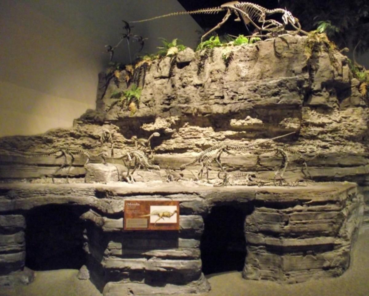 Dinosaur display at the museum.