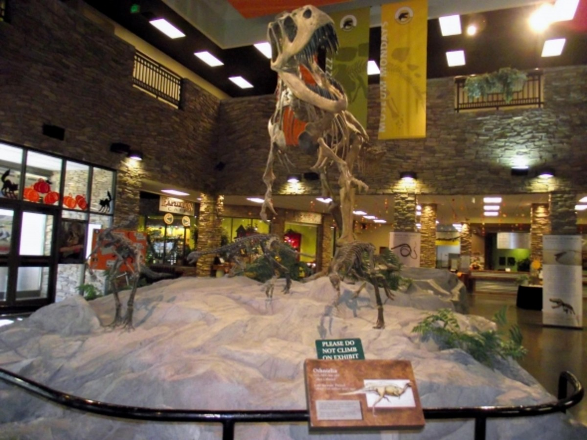 Dinosaurs for Children: The Museum of Ancient Life
